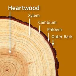 Kiln Dried Wood