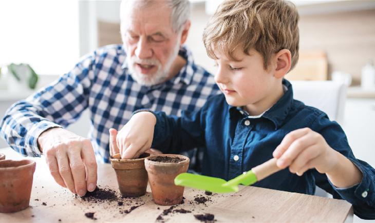 Planting Kitchen Garden At Home